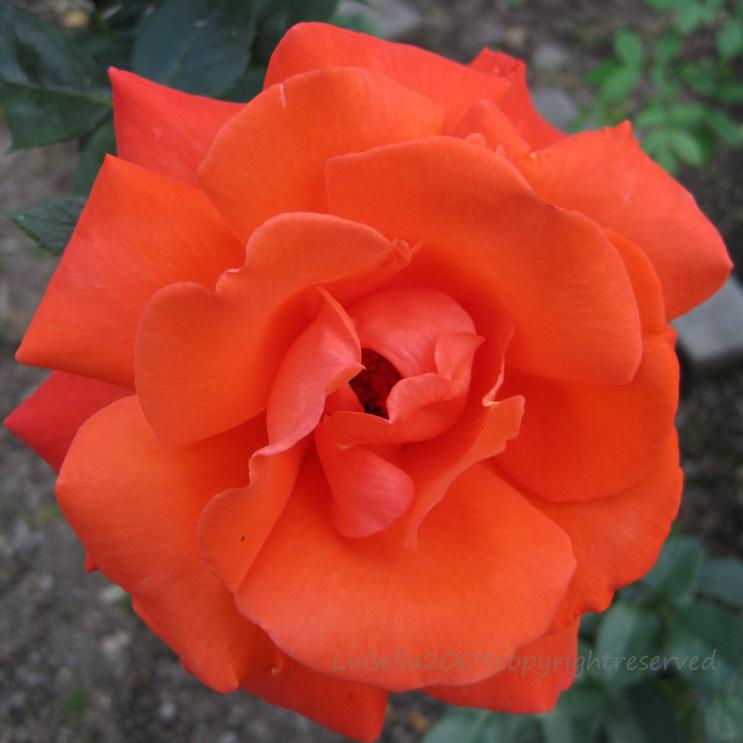 arancio-nostre1-18-jpgx