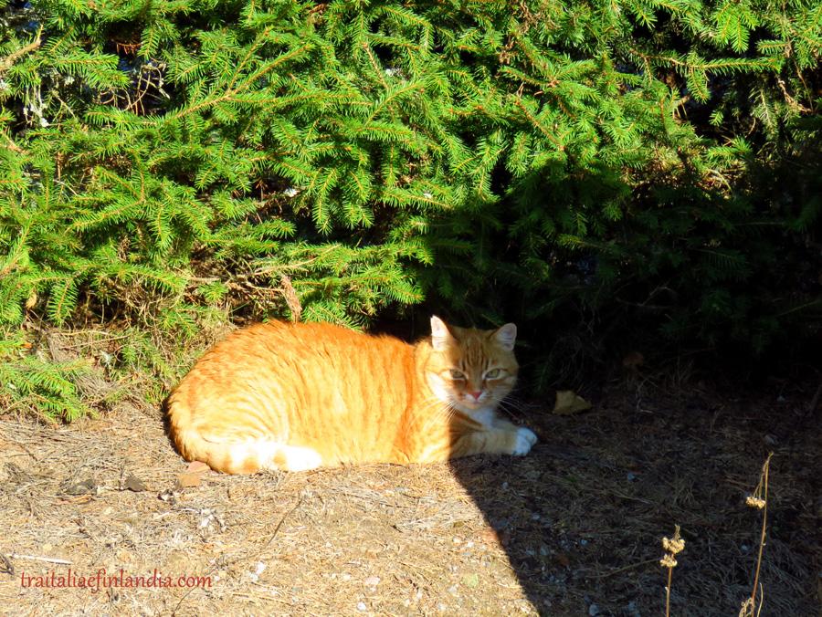tigre (18).JPGcc