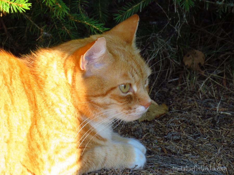 tigre (19).JPGcc
