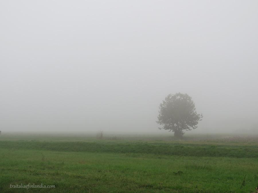 Nebbia (1)