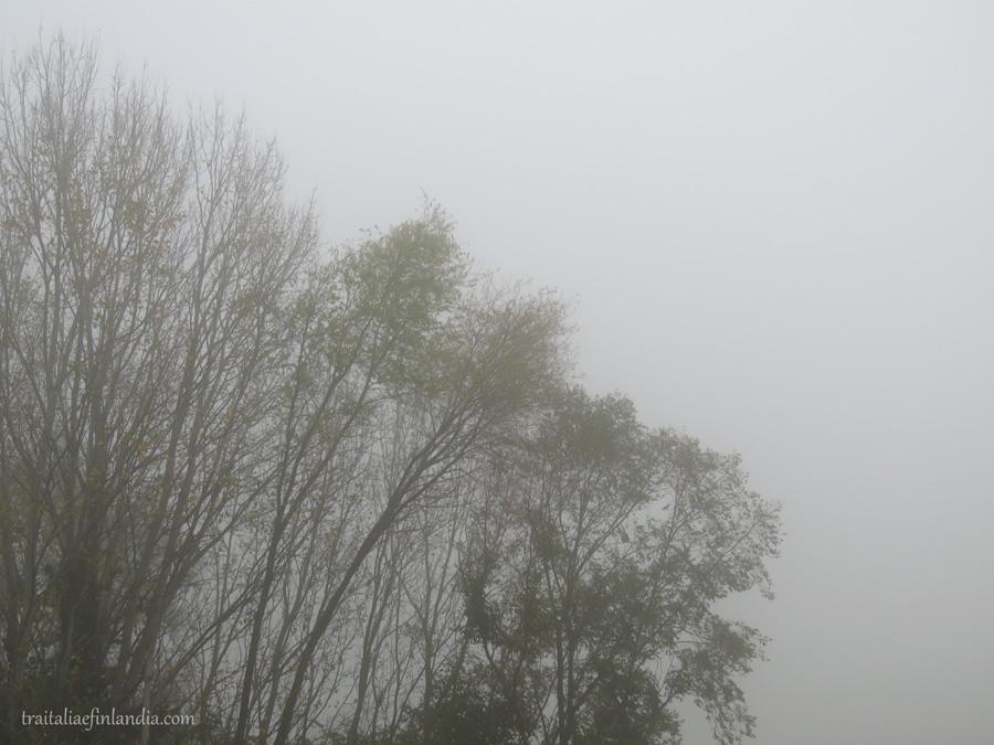 Nebbia (10)
