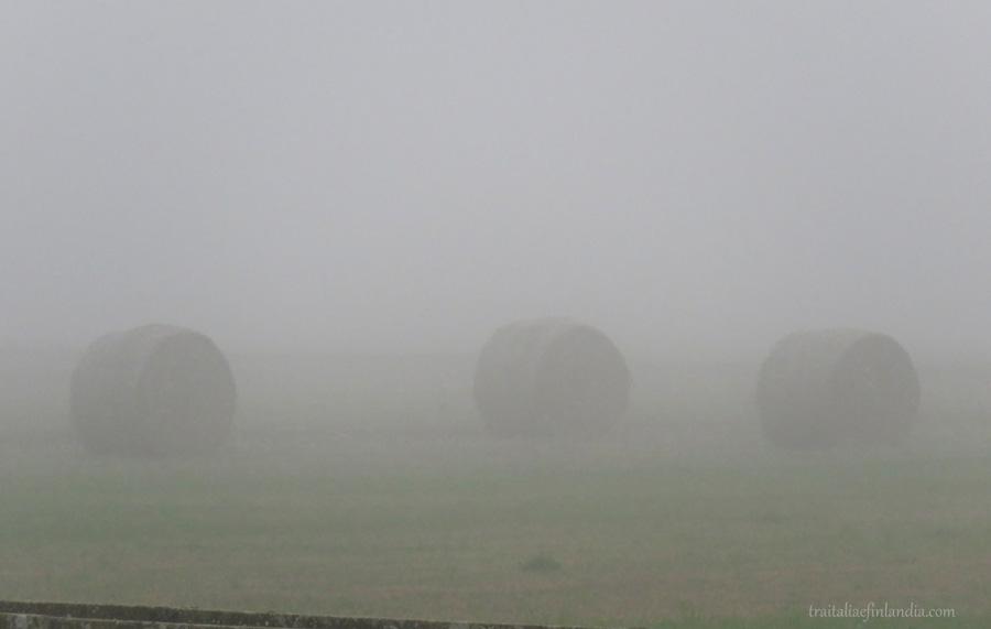 Nebbia (12)