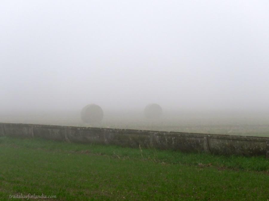 Nebbia (13)
