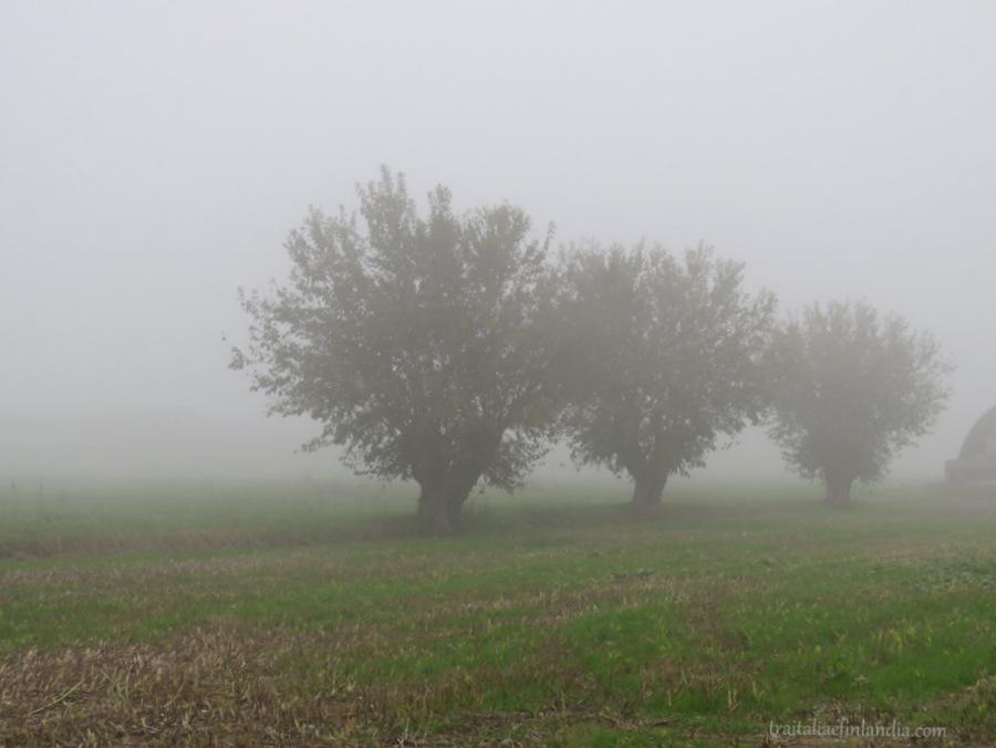 Nebbia (3)
