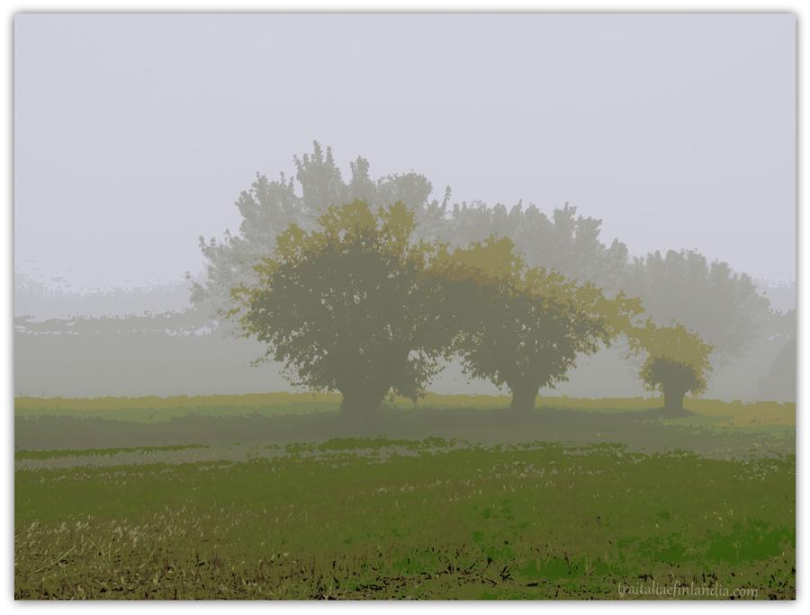 Nebbia (3)hh