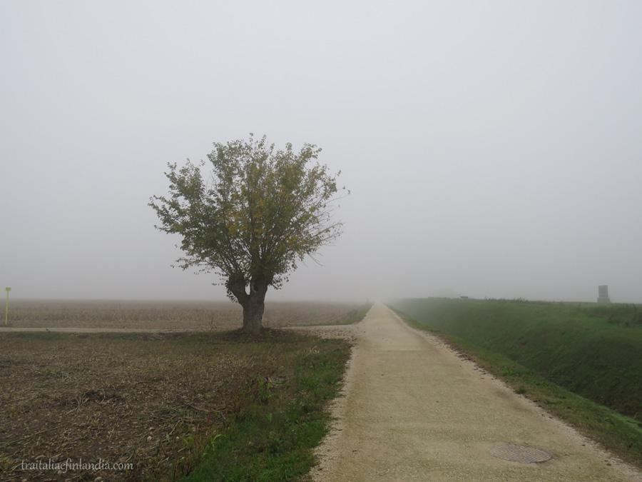 Nebbia (4)