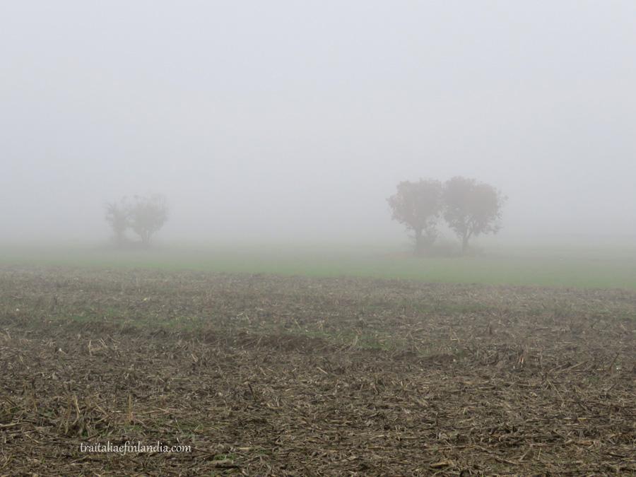 Nebbia (8)