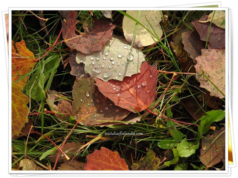 foglie (1)